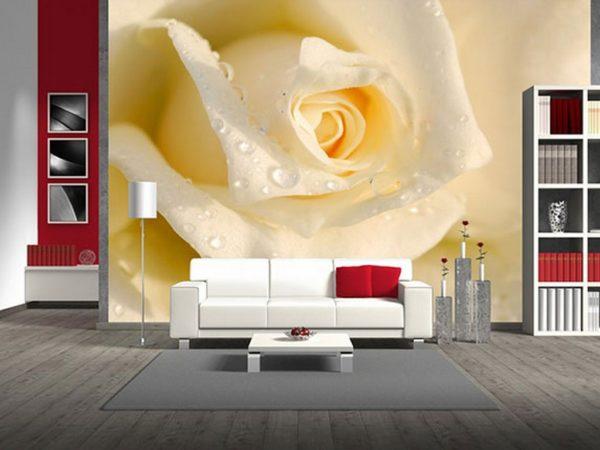 Большая белая роза на стене